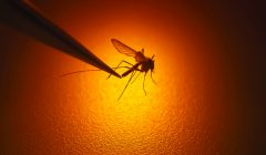 Brandeis warns students about mosquito-borne diseases